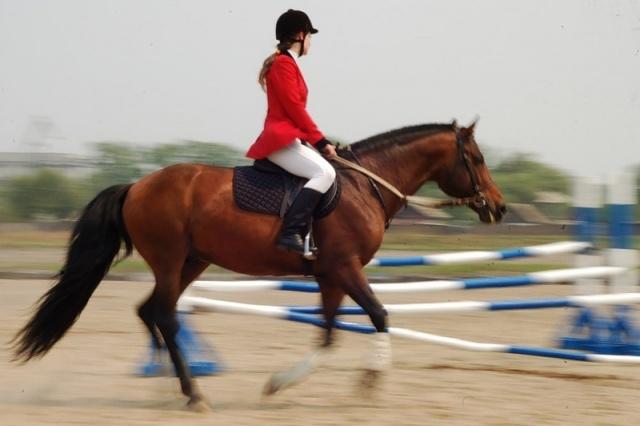 Костюм всадник на лошади